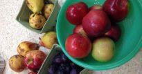 pears-apples-plums-medium